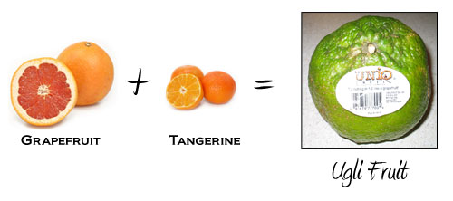 Grapefruit + Tangerine = Ugli Fruit