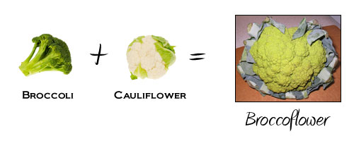 Broccoli + Cauliflower = Broccoflower