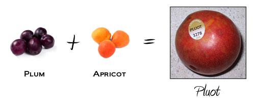 Plum + Apricot = Pluot