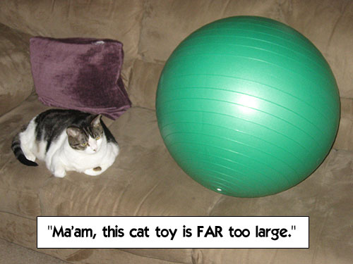 Ma'am, this cat toy is FAR too large.